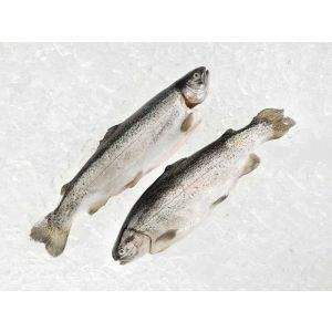 Trout - Rainbow, Fresh, Farmed, USA, Whole (1lb avg)