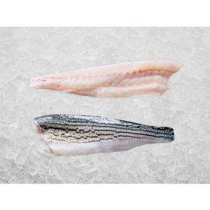 Pacifico Striped Bass Fillets on Ice
